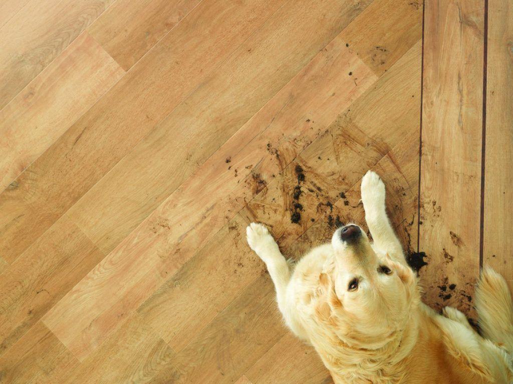 Prečo vinylovú podlahu. - dizajnovepodlahy.sk